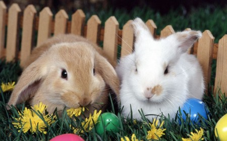 coelhos-pascoa
